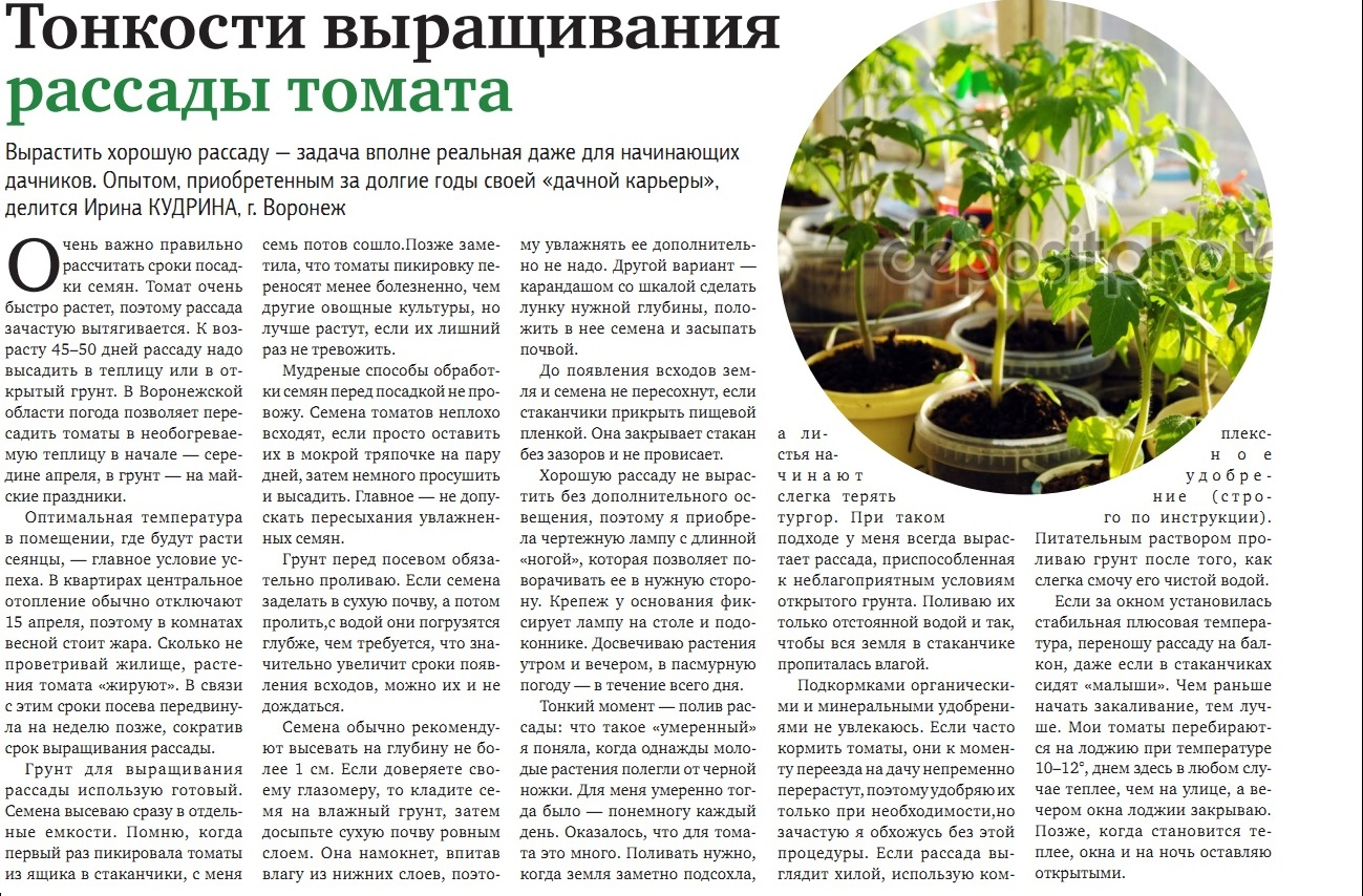 Срок выращивания помидоров в теплице 36